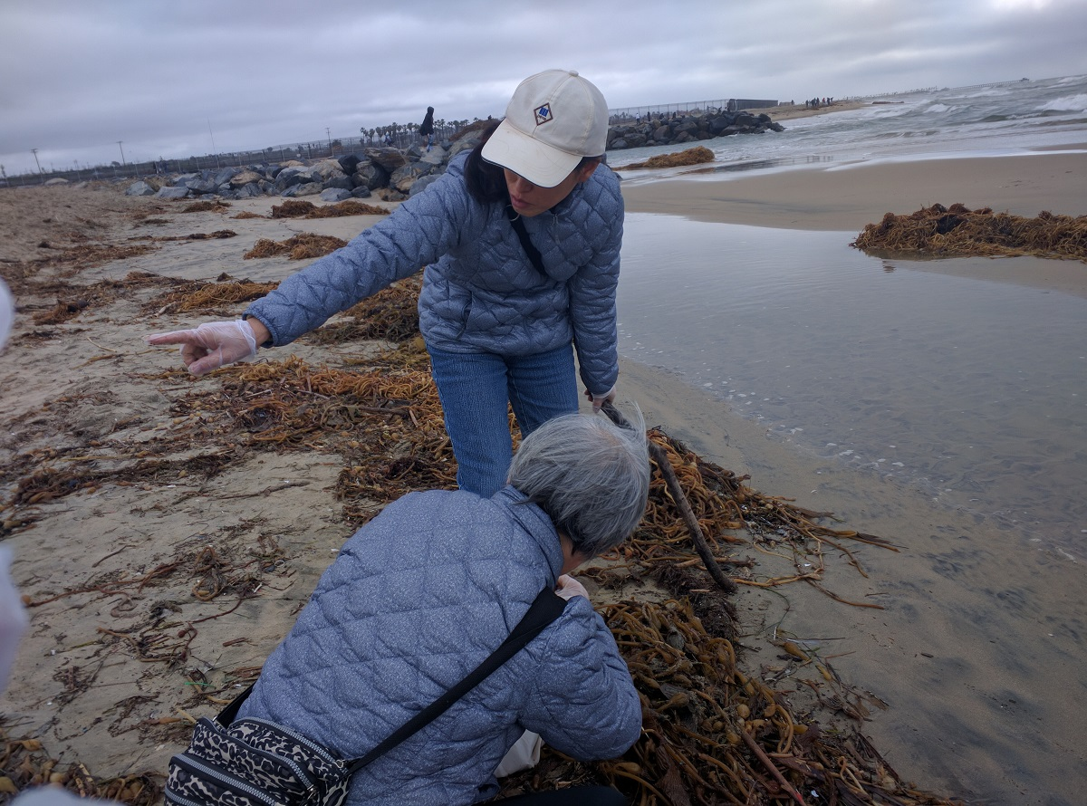 Beach Cleaning in Southern California